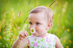 Little girl with the daisy. Little girl is smelling the daisy flower outdoors stock images