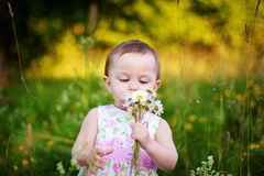 Little girl with the daisy Royalty Free Stock Image