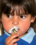 Little Girl and a Daisy Stock Image