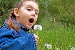 Little girl with dandelion Stock Photo