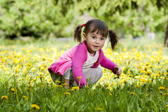 A little girl on the dandelion field. A little girl wearing a pink shirt, sitting on the dandelion field Royalty Free Stock Image