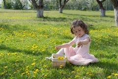 Little girl on dandelion lawn pick up dandelions in a basket stock images