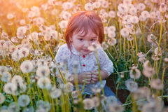 Little girl with dandelion Royalty Free Stock Photo