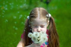 Little girl with dandelions. Little girl on a green meadow blowing a bouquet of dandelions Royalty Free Stock Photos