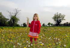 Little girl with dandelions Stock Images