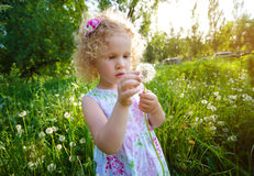 Little girl with dandelions. Royalty Free Stock Image