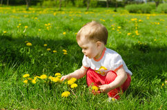 Little Girl In Dandelions Stock Photography