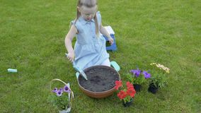Little girl dig hole into pot with soil for replant petunia. Little girl work with flowers in the garden. Adorable child replant flowers from plastic pots into a stock footage