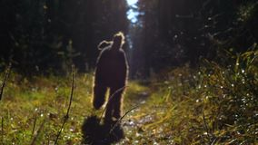 A little girl and dog run along a sunlit path in the autumn forest. A little girl and dog breed Airedale Terrier run along the sun-drenched path in the autumn stock footage
