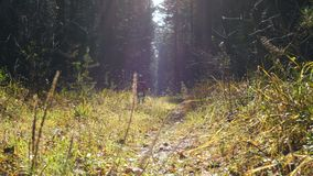 A little girl and dog run along a sunlit path in the autumn forest. A little girl and dog breed Airedale Terrier run along the sun-drenched path in the autumn stock video
