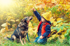 Little girl with dog in the forest Stock Images