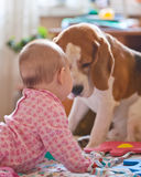 Little girl and dog Royalty Free Stock Photo