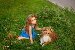 Little girl with a dog Sheltie royalty free stock images