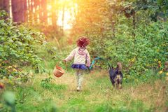 Little girl with dog walking in the forest. Back to camera. Girl carrying a picnic basket royalty free stock photos