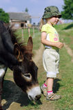Little girl with donkey. Feeding Stock Image