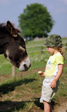 Little girl with donkey. Feeding Royalty Free Stock Photo