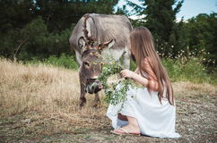 Little girl and donkey Royalty Free Stock Photo