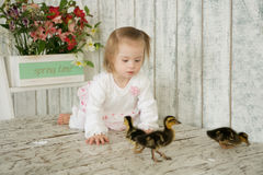 Little girl with Down syndrome creeps for goslings. Girl with Down syndrome creeps for goslings Royalty Free Stock Photos