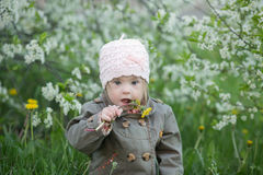 Little girl with Down syndrome in the mouth pulls dandelions Stock Photography