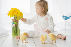 Little girl with Down syndrome playing with yellow chickens. A girl with Down syndrome playing with yellow chickens Royalty Free Stock Photo