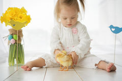 Little girl with Down syndrome playing with yellow chickens Royalty Free Stock Image