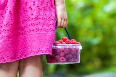 Little girl in dress child hand holdind small basket of ripe ras. Pberries. Close-up Stock Image