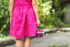 Little girl in dress child hand holdind small basket of ripe ras. Pberries. Close-up Royalty Free Stock Images
