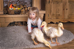 Little girl with ducklings royalty free stock photography