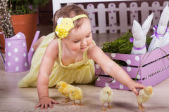 Little girl in a yellow dress stroking the yellow chicken. Little girl with Easter chicks on the floor Royalty Free Stock Photography