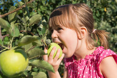 A little girl eat an apple Royalty Free Stock Photos