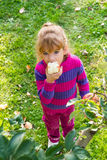 Little girl eat apples Royalty Free Stock Photos