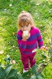 Little girl eat apples Royalty Free Stock Photos