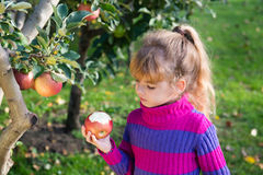 Little girl eat apples royalty free stock photography