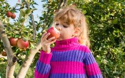 Little girl eat apples Stock Photography