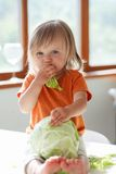 Little girl eats cabbage Royalty Free Stock Image