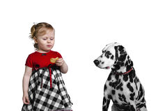 Little girl eats cookies and teases Dalmatian dog Royalty Free Stock Image
