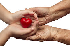 Little girl and elderly woman keeping red heart in their palms t Stock Photos