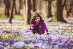 Girl inspired by nature. Little girl enjoy the sun, she is gathering the flowers, inspired by blossom meadow of saffrons Royalty Free Stock Photography
