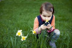 Little girl enjoys the smell of flowers on the yellow field Rec Stock Photos