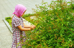Little girl examines green bush Stock Photo