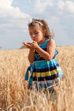 Little girl examines something. To stand in the field of ripe wheat royalty free stock photography