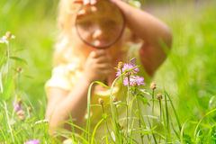 Little girl examining batterfies on flower using magnifying glass Royalty Free Stock Photos