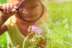 Little girl examining batterfies on flower using magnifying glass Royalty Free Stock Image