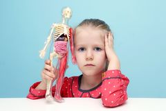 Little girl  explore the structure of human body. Little funny blonde girl explore the structure of human body. The skeleton of a man with insides. Early Royalty Free Stock Images