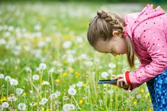 Little girl exploring nature with her smartphone Royalty Free Stock Images