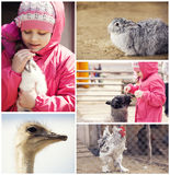 Little girl on a farm with animals Stock Images