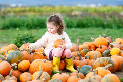Little girl farming on pumpkin patch. Adorable little kid girl having fun with farming on a pumpkin patch. Traditional family festival with children Stock Photography