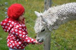 Little girl feed animal Royalty Free Stock Photo