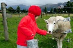 Little girl feed animal Stock Photography