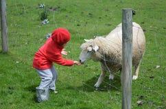 Little girl feed animal Royalty Free Stock Photos